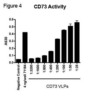 CD73 Activity