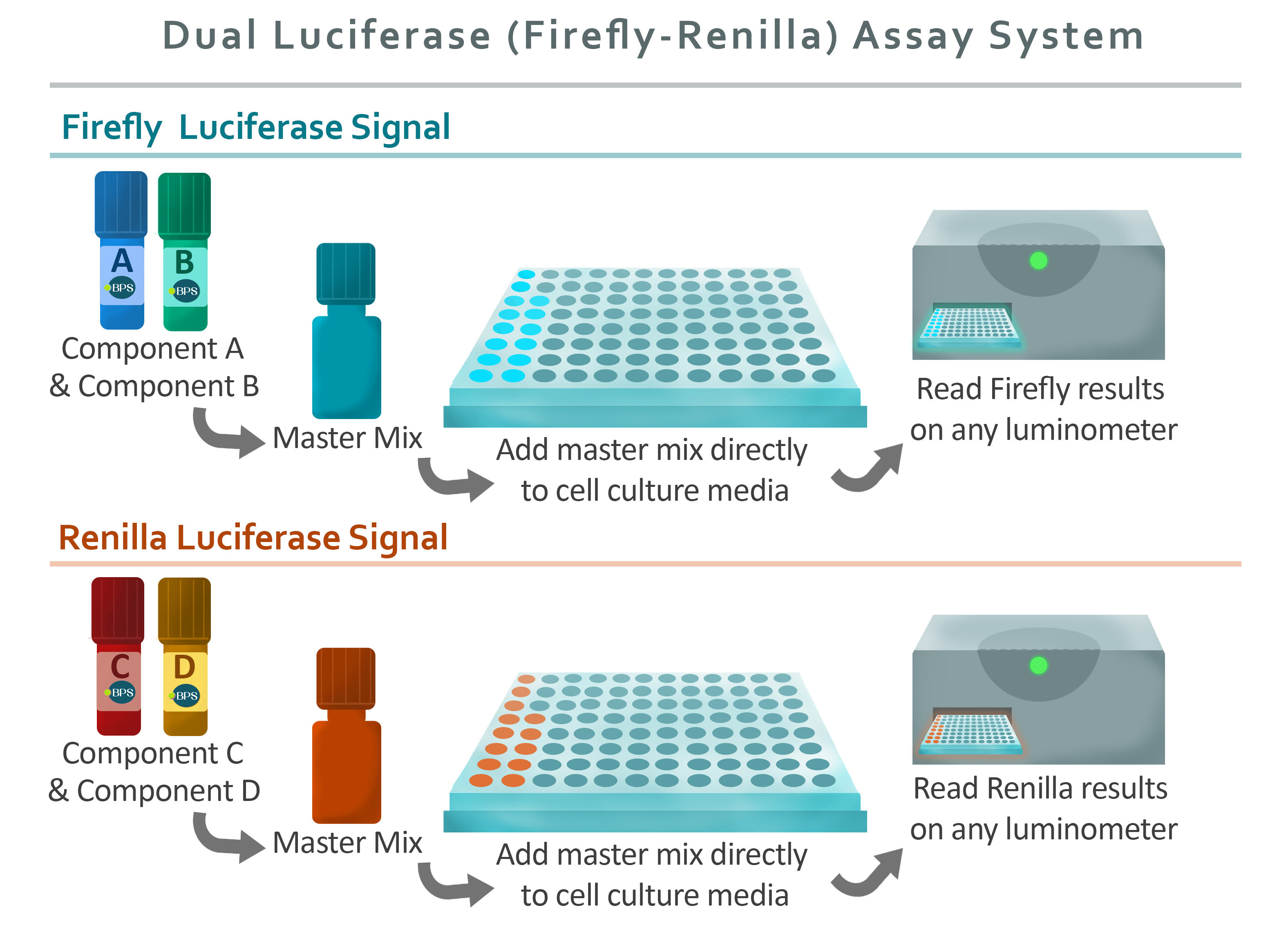 Dual Luciferase Assay System