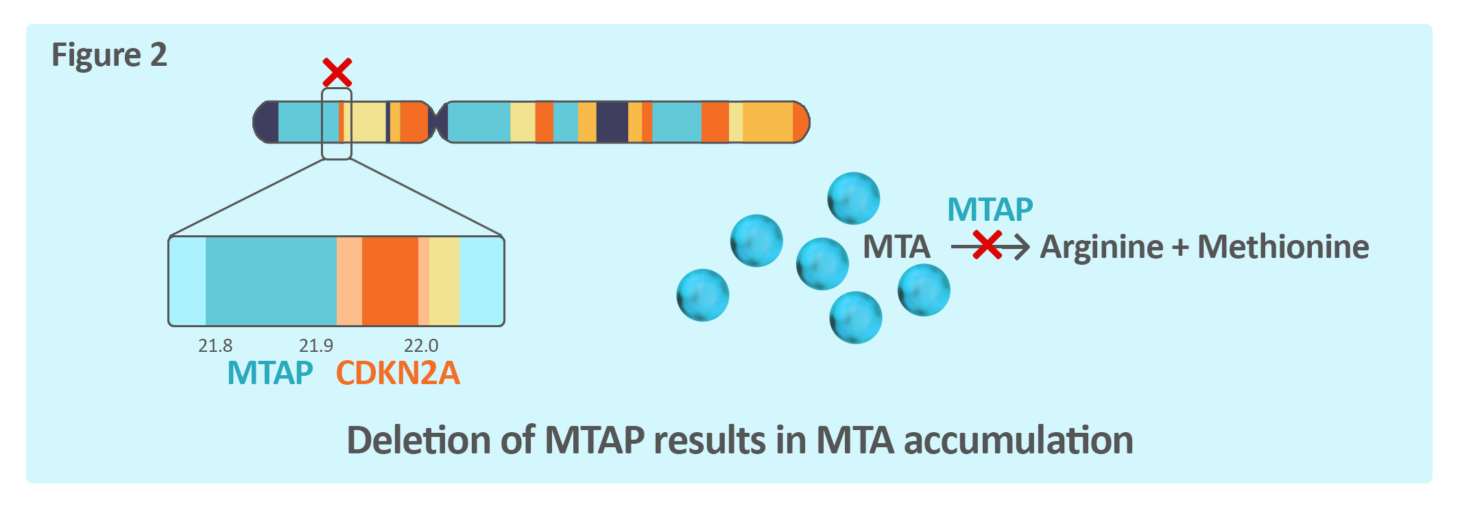 MTAP Chromosome