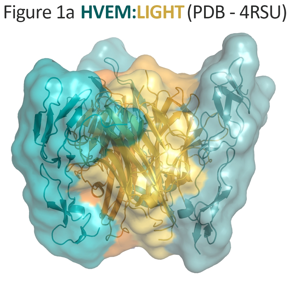 HVEM LIGHT Structure