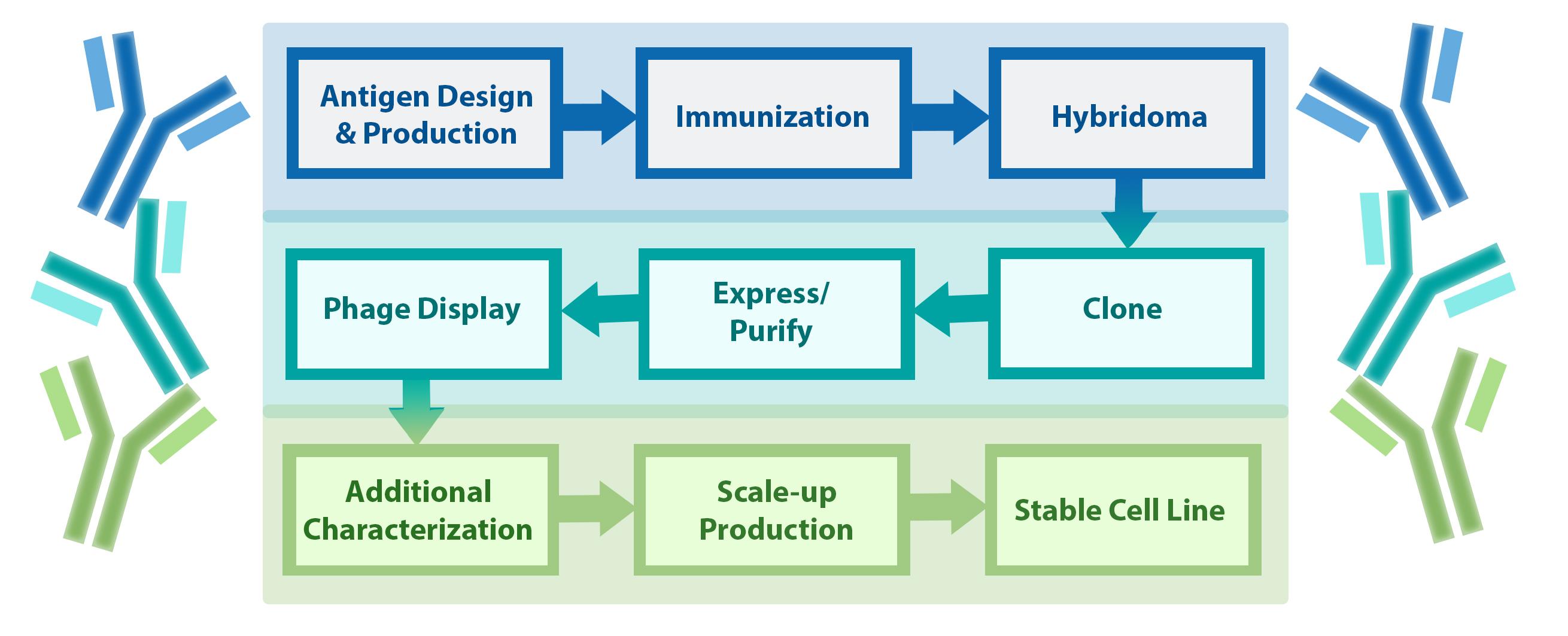 Antibody Services BPS