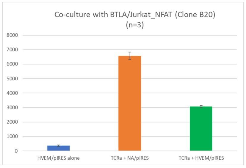 BTLA NFAT Jurkat Cell Line