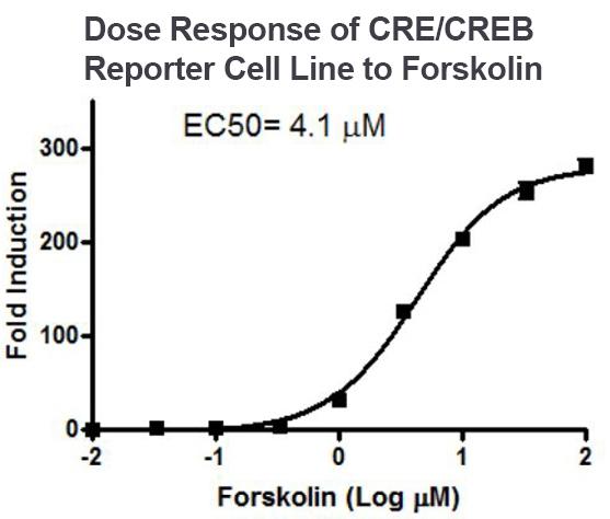 CRE CREB Forskolin