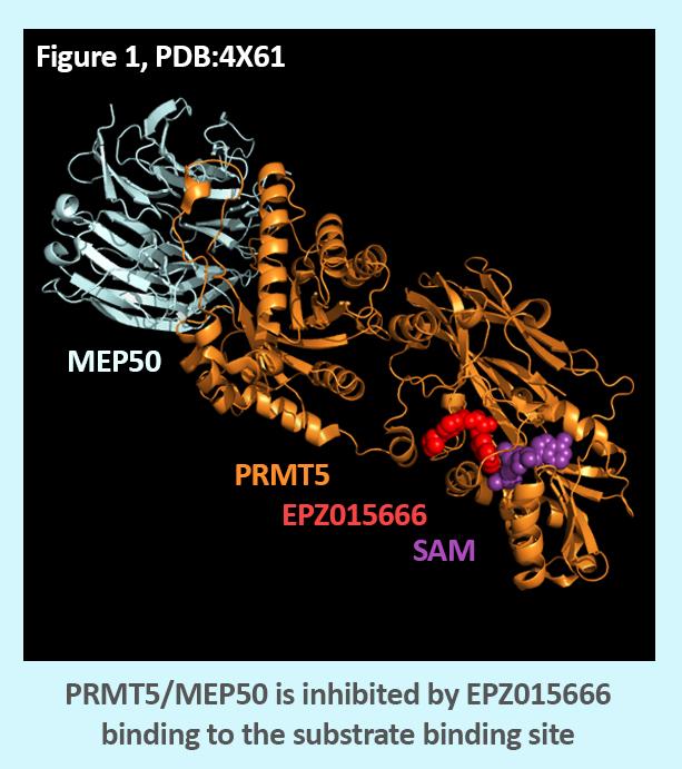 PRMT5 Structure
